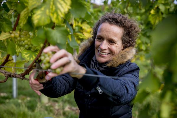Five inspiring women working in English wine