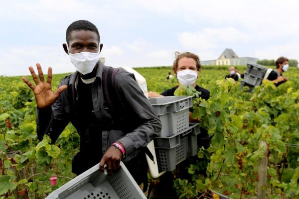 Refugees are helping French wineries fill labour shortages