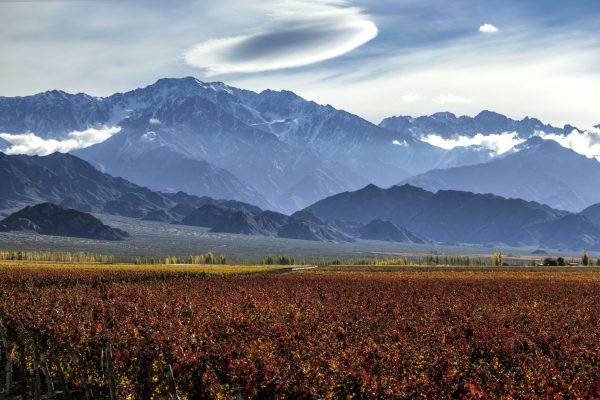 Wines of Argentina launches new innovation programme