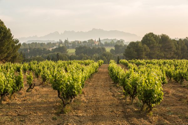 Guarda Superior Cava will be 100% organic by 2025