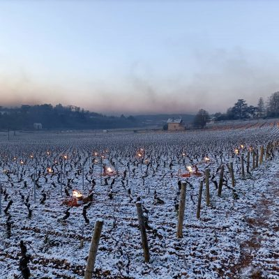 Government aid for French wine producers who gamble with the weather