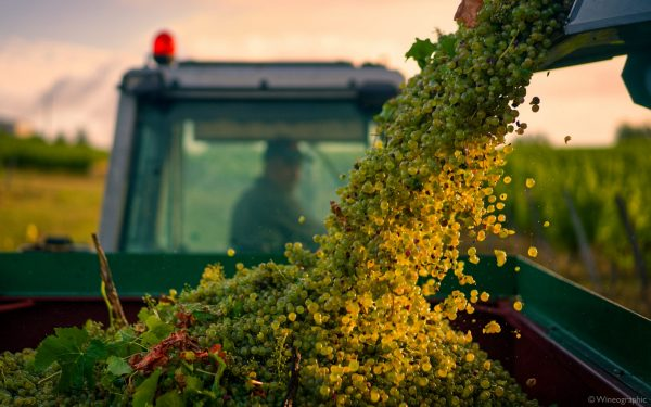 Errazuriz Wine Photographer of the Year captures beauty of harvest with winning shot