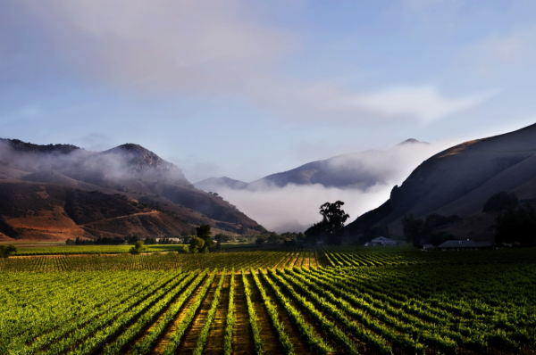 Vintage Wine Estates receives further $100m in backing