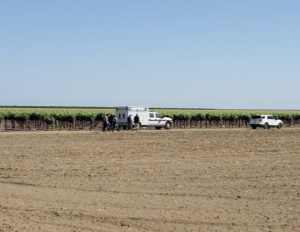 One killed and two wounded in shooting at California vineyard
