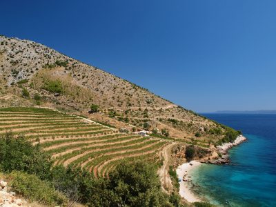 New Croatian wine importer launches in the UK