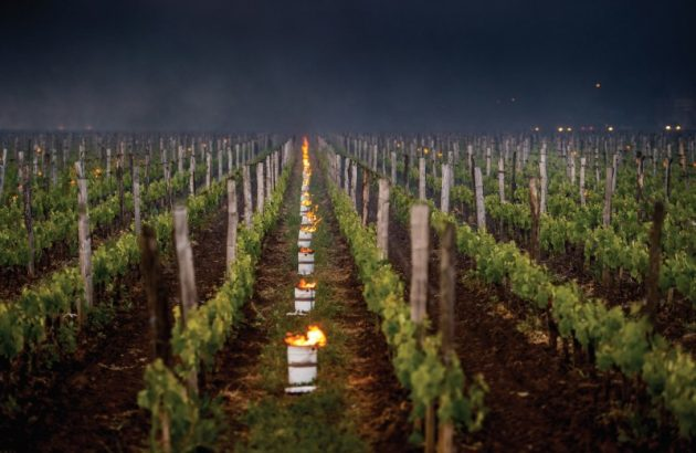 Kicking up a storm: the impact of natural disasters on wine production