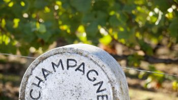 In focus: The rise of still wines from Champagne