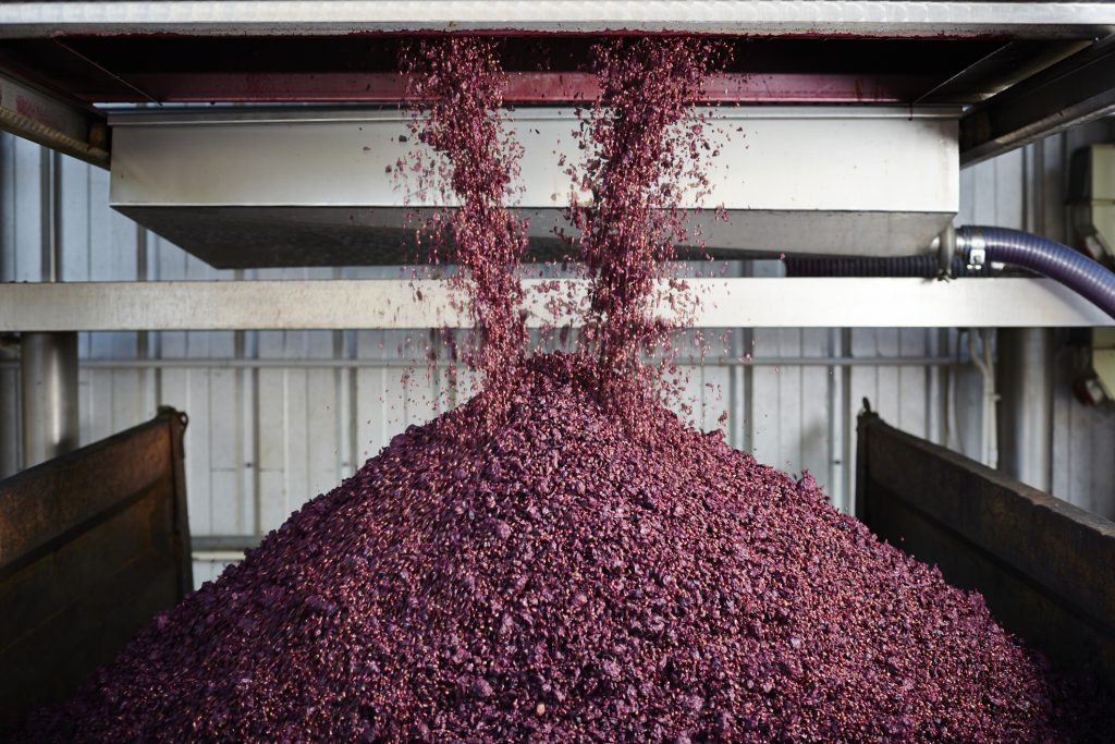 Grapes unloaded: smoke-tainted grapes
