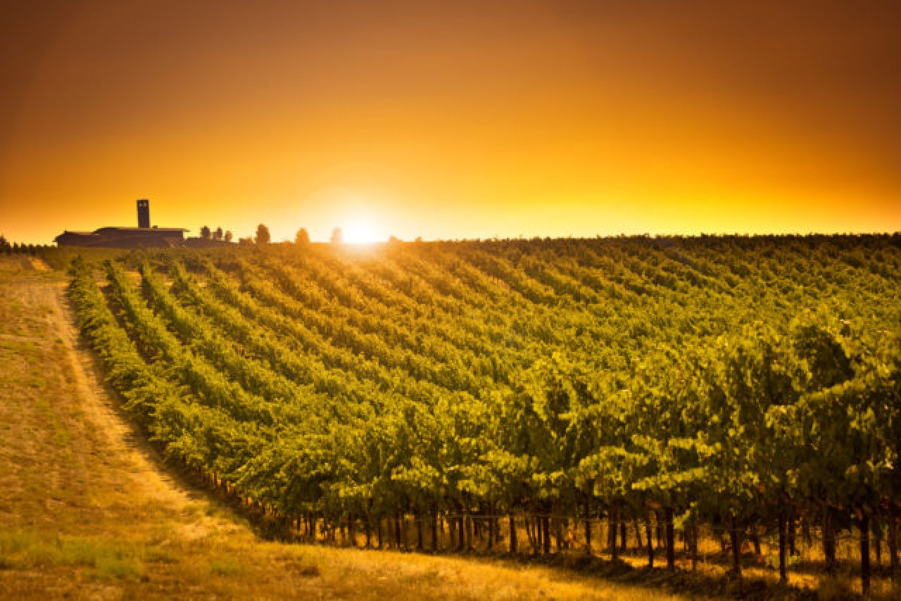 A dive into the diversity of Washington State wines