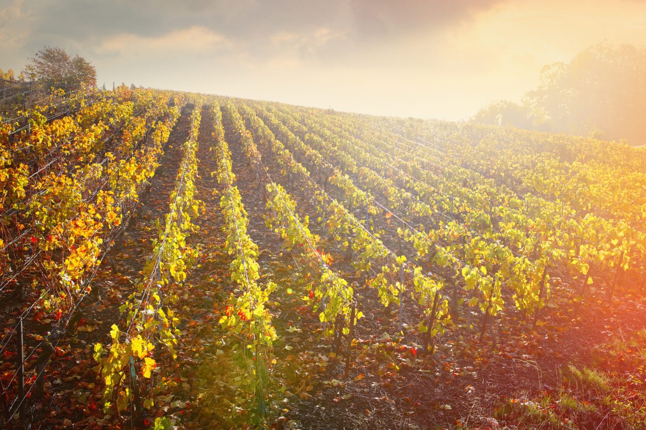 Champagne 2021 'a very human harvest' says Krug cellar master