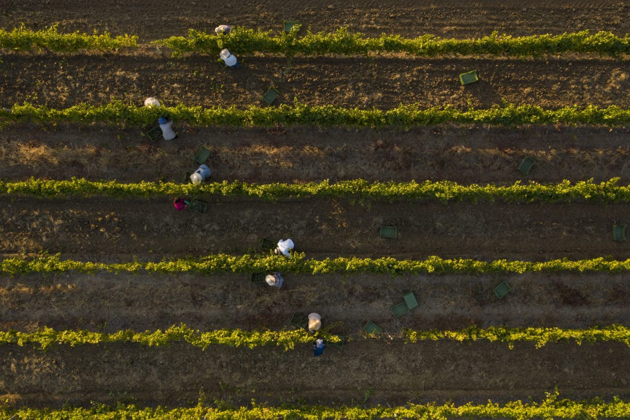 The Wine & Spirits Show 2021 brand spotlight: Oakley Wine Agencies