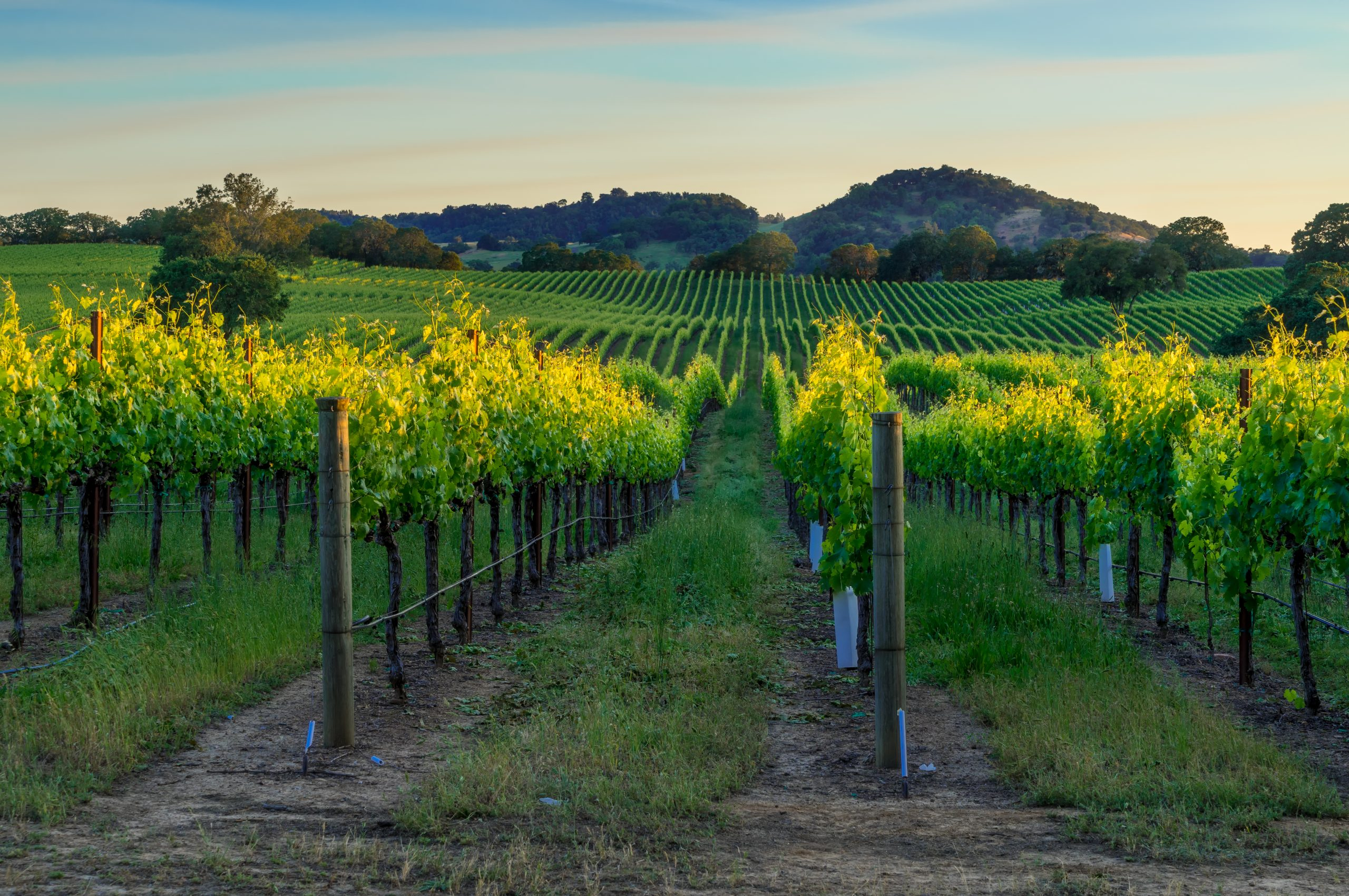 Vineyards in Napa Valley: Former AI boss makes roots in Napa Valley