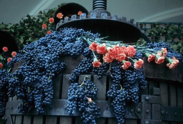 Rioja-masters-pic