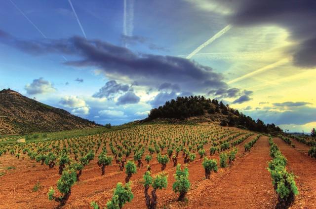 colourful vineyard view Rioja