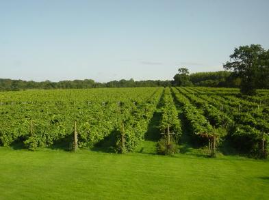 Wickham Vineyard in Hampshire