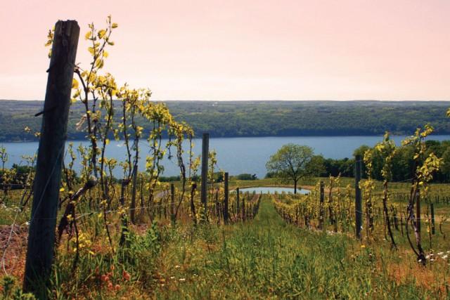 Seneca Lake Wine Trail, New York