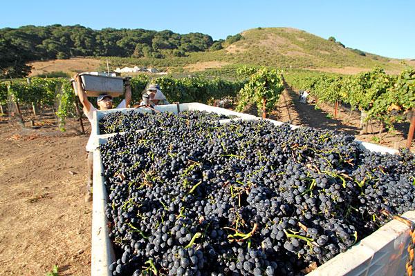 California harvest