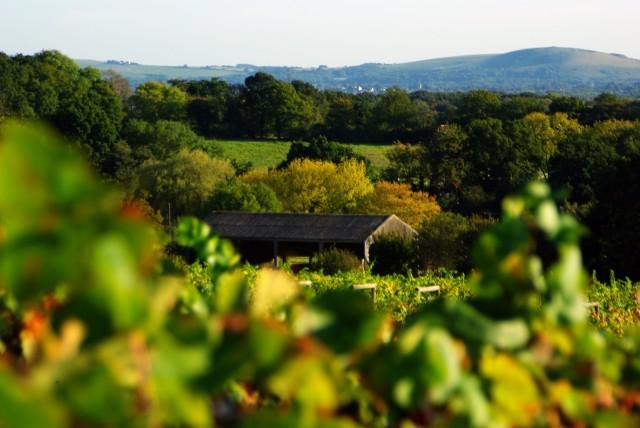 Bolney Wine Estate in West Sussex