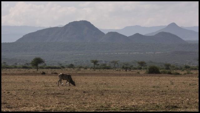9-Ethiopia-around-Awash-vineyard1-1024x582