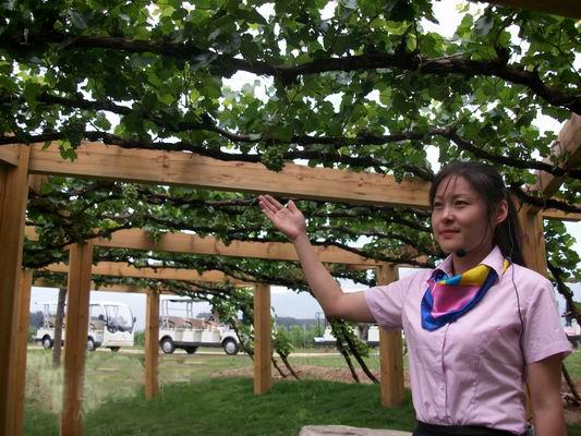 Photo credit: Wine China