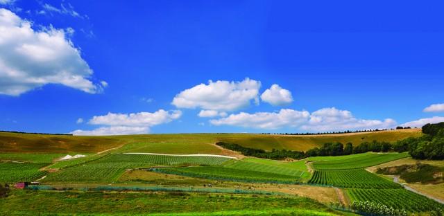 Bride Valley Vineyard, Litton Cheney, Dorset, England.