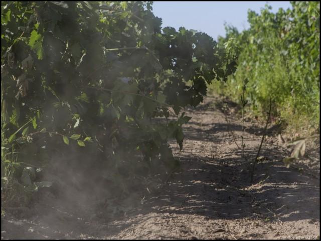 17_Kazakhstan_ISSYK_Winery_M93A4020_EDT-1024x770