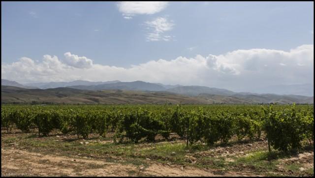 17_Kazakhstan_Turgen_Winery_M93A4067_EDT-1024x579