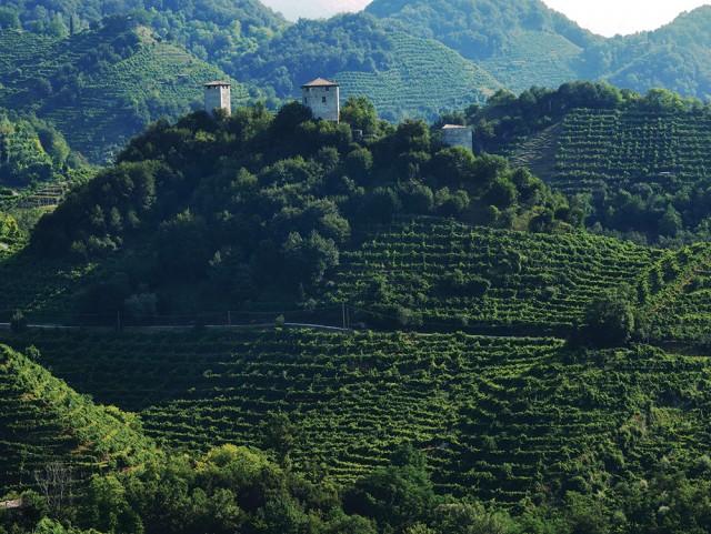 Prosecco-Vineyards