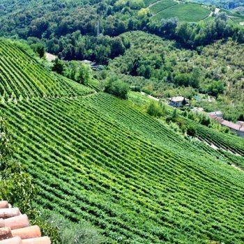 Paitin's vineyards in Neive