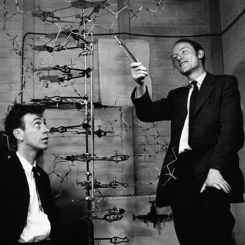 Watson-Crick-DNA-model