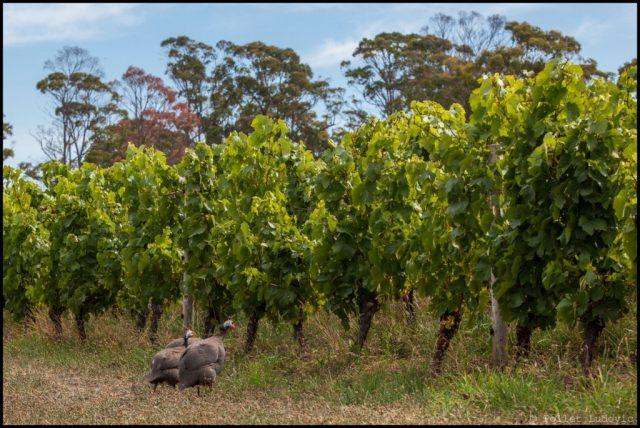 25_tasmanie_delamere_IMG_5236_EDT-1024x685
