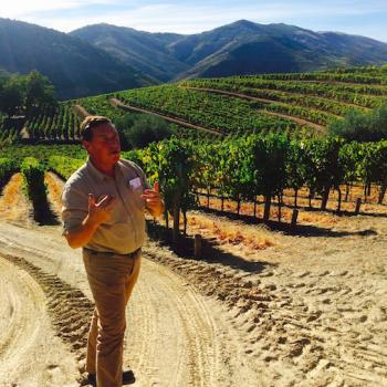 Job search wine industry