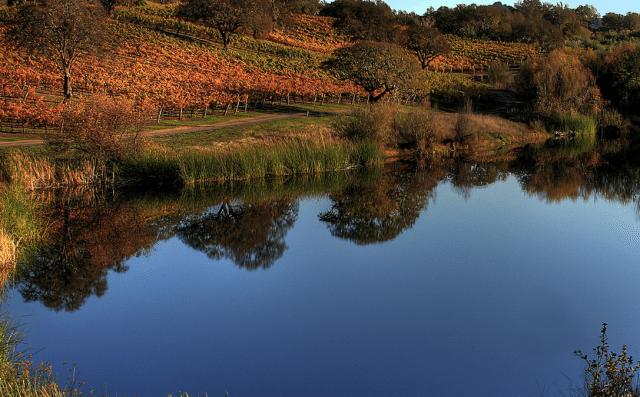 jordan-winery-wetlands