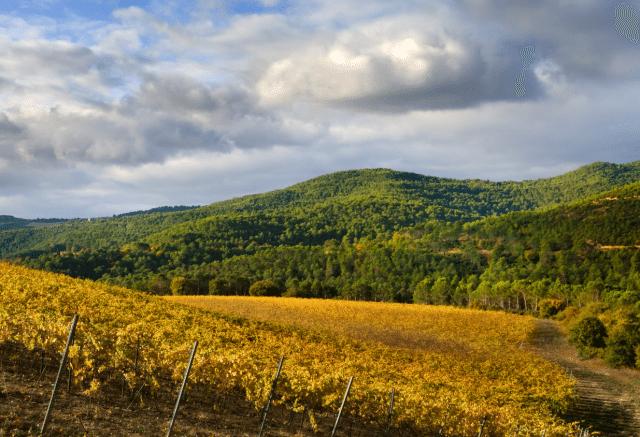 navarra-vineyards
