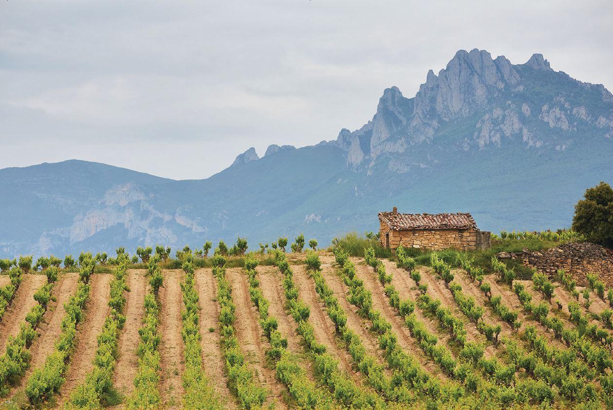 wines in Spain