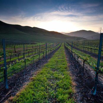 Vintage Wine Estates acquires Central Coast winery